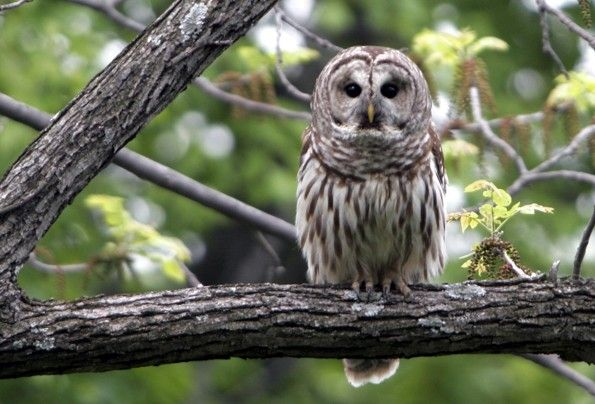 owlbw The Morning Flap: February 29, 2012